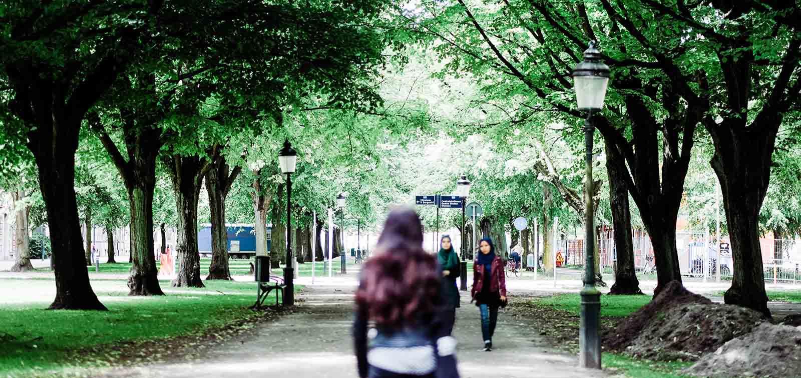 Áreas verdes en la ciudad